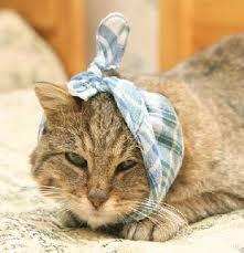 Почему у котов болят уши